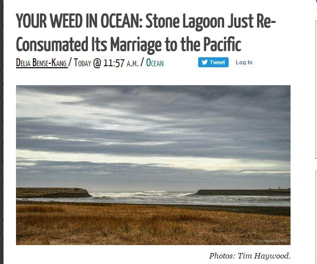 weed in ocean